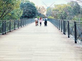 公園の橋の上の写真・画像素材[2984412]