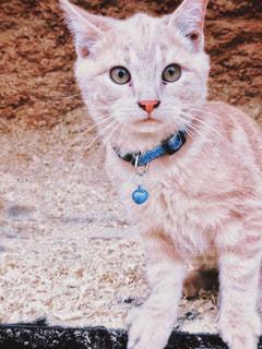 旅先で出会った仔猫 1の写真・画像素材[2995061]