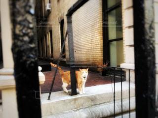 マンハッタンの猫の写真・画像素材[2995069]