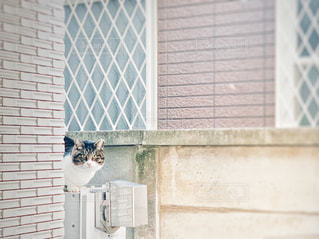 室外機の上の猫 2の写真・画像素材[2995296]
