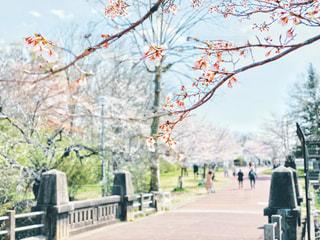 公園と桜の枝の写真・画像素材[3060841]