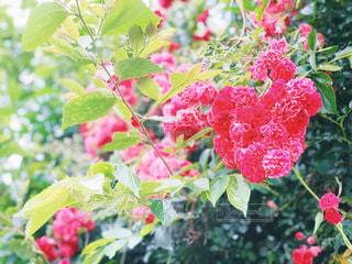 ハート型のお花の写真・画像素材[3067201]