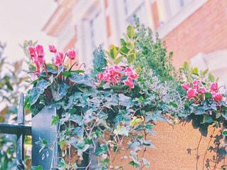 イギリスのお花の写真・画像素材[3067248]