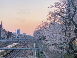 線路と桜 1の写真・画像素材[3071552]