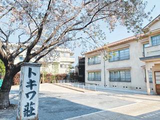 トキワ荘の桜の写真・画像素材[3084583]