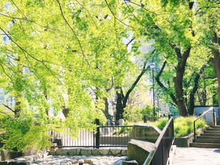 新緑の公園 2の写真・画像素材[3140574]