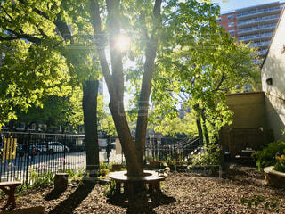 学校の中庭で遊ぶリスの写真・画像素材[3145750]