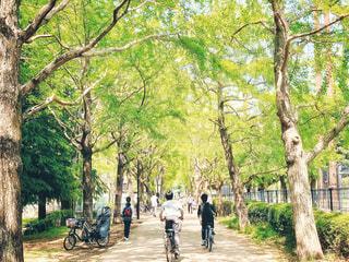 新緑の公園 5の写真・画像素材[3149360]