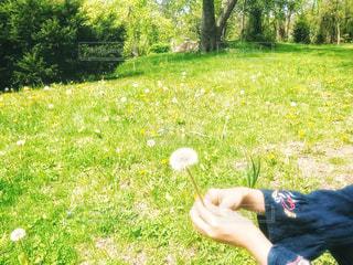 綿毛と少女の写真・画像素材[3215198]