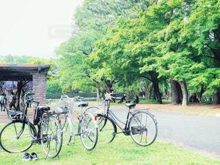 藤棚と自転車 2の写真・画像素材[3216202]