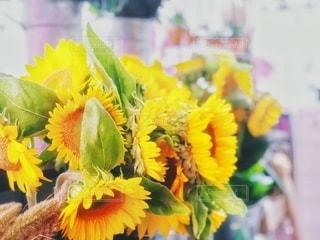 マーケットの向日葵の写真・画像素材[3560157]