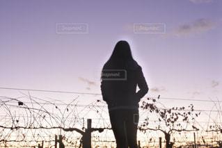 女性,後ろ姿,人物,背中,人,後姿,オーストラリア,夕やけ,葡萄畑