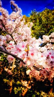 近くの花のアップの写真・画像素材[1144151]