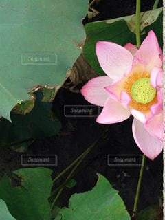 近くの花のアップの写真・画像素材[1144152]