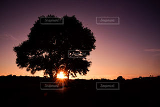 空,夕日,木,きれい,綺麗,夕焼け,夕暮れ,夕方,シルエット,美しい,黄昏,夕陽,マジックアワー,グラデーション,夕焼け空,うつくしい,最上川スワンパーク