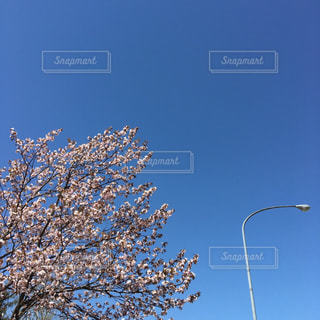 空を飛んでいる人の写真・画像素材[1147970]