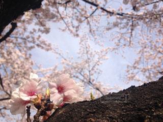 木の枝に花の花瓶の写真・画像素材[1164043]