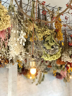 ライトで飾られた木の写真・画像素材[2824006]