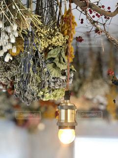 花をクローズアップするの写真・画像素材[2824012]