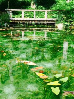 モネの池の写真・画像素材[1142726]