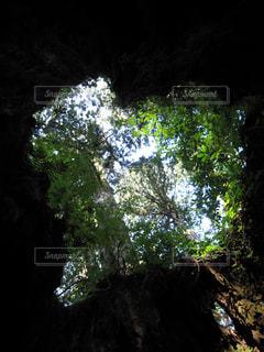 森の中のハートの写真・画像素材[1142720]