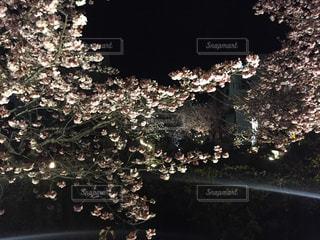 木の花の花瓶の写真・画像素材[1146433]