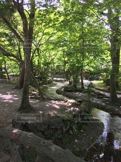 フォレスト内のツリーの写真・画像素材[1205267]