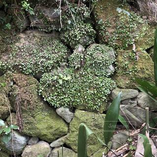 葉っぱ,ハート,苔,岩