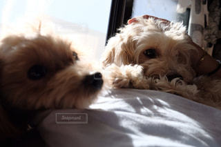 犬,部屋,室内,いぬ,可愛い,日向ぼっこ