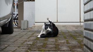 猫,動物,屋外,人物,野良猫,ネコ