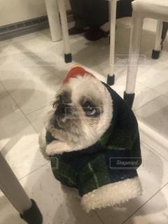 床に座って犬の写真・画像素材[1143566]