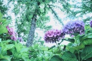 花園の写真・画像素材[3384275]