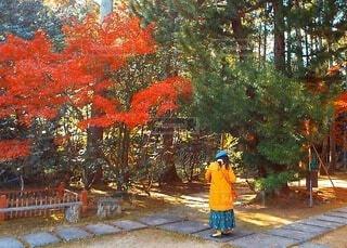 秋の散歩の写真・画像素材[3910154]