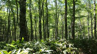 森の中の木の写真・画像素材[1159057]