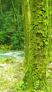 森の中の緑の植物の写真・画像素材[1161513]