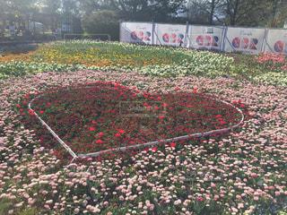 ハート型の花の写真・画像素材[1144625]
