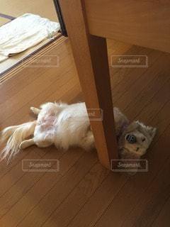 犬の写真・画像素材[37170]