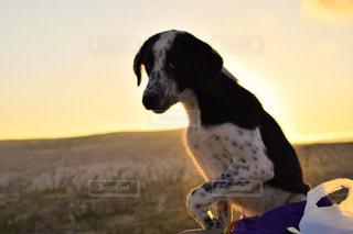犬,自然,夕日,綺麗,オレンジ,コントラスト,野良犬