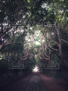空気が美味しい道の写真・画像素材[1252893]