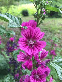 名前の知らない花の写真・画像素材[1252915]