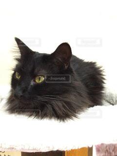 カッコイイ猫さん。の写真・画像素材[1256182]