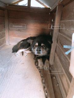 木製の表面の上に座って犬の写真・画像素材[1151175]