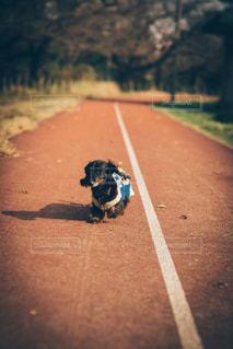 犬の写真・画像素材[1200295]