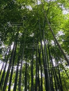 森の中の木の写真・画像素材[1163807]