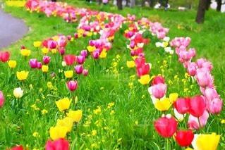 花の写真・画像素材[55208]
