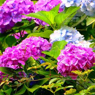 花の写真・画像素材[146192]