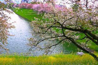 自然,風景,花,桜,屋外,カラフル,青空,水面,葉,景色,花びら,鮮やか,樹木,草木