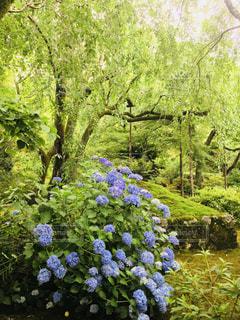 公園,屋外,森,緑,散歩,景色,紫陽花,梅雨,梅雨の晴れ間