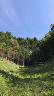 近くの緑豊かな緑の森の写真・画像素材[1164629]