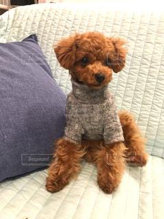 ベッドの上に横たわる大きな茶色の犬の写真・画像素材[1187142]